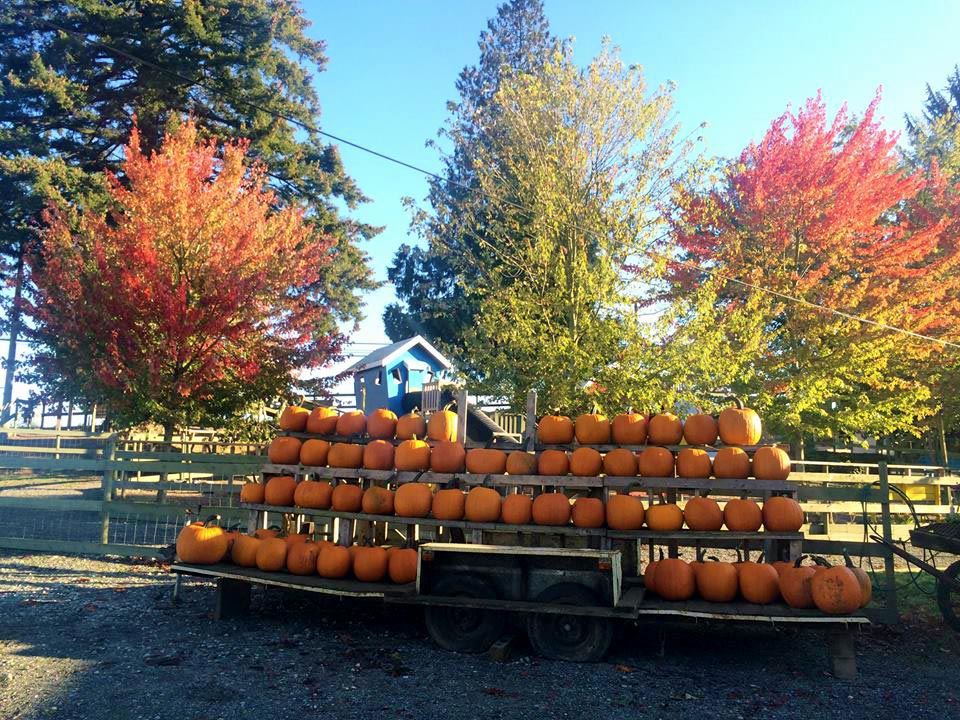 Mini Road Trip: Langley's Pumpkin Patches & Corn Mazes