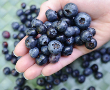 Blueberries: Summer's Top Pick at Weller's Blueberry Farm in Langley