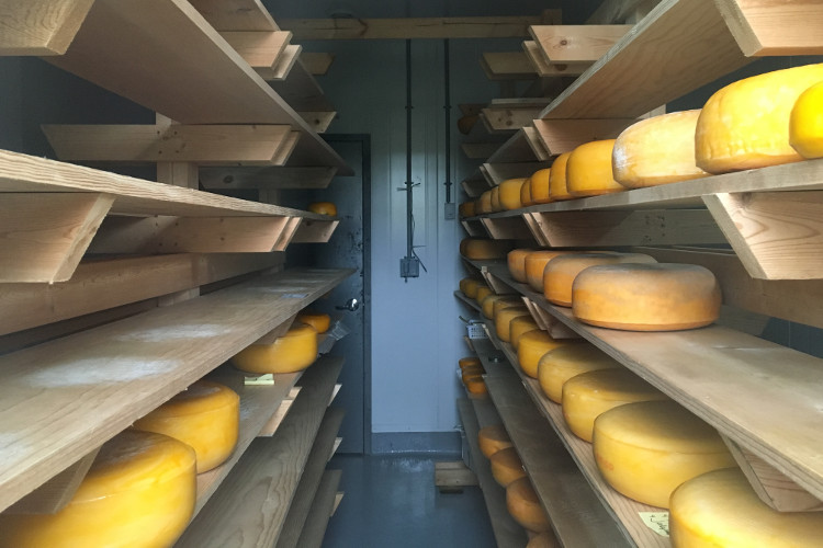 Cheese curing