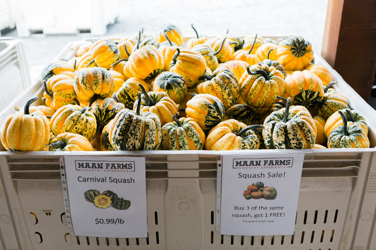 Winter squash are usually in season September – December.