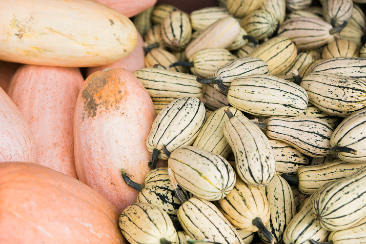 Run your hands over piles of gnarly, striped and speckled winter squash and feel fresh dirt still stuck on the sides and in the stems.