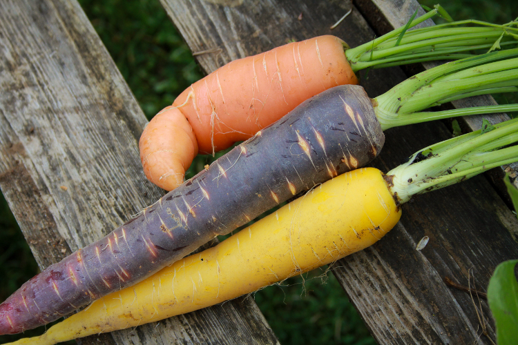 Dirt doesn't hurt. Try your hand at harvesting in over two acres of organic gardens.