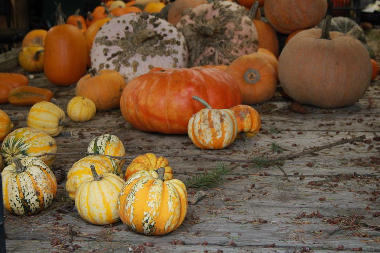 Stripes, warts, large, small, all sizes and shapes of squash are welcome in A Rocha's fields.