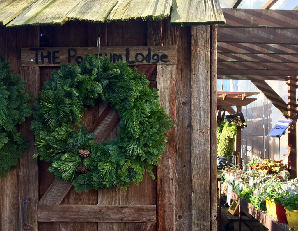 Potter's Farm & Nursery in Surrey Gets in the Christmas Spirit