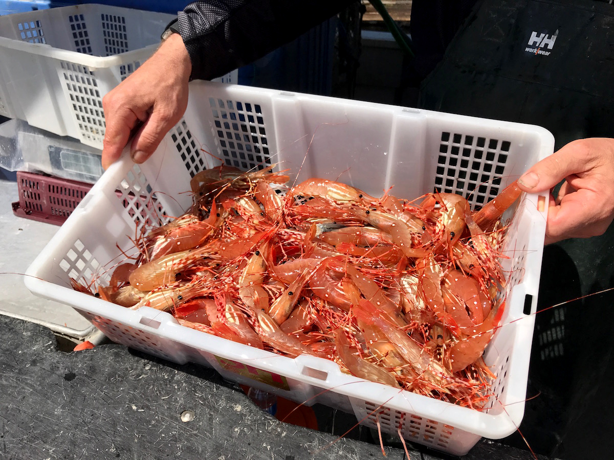 At the Docks in Vancouver for the First Haul of BC Spot Prawns
