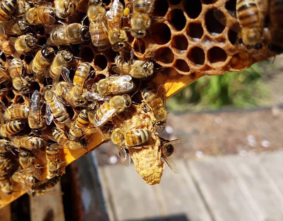 East Van Bees