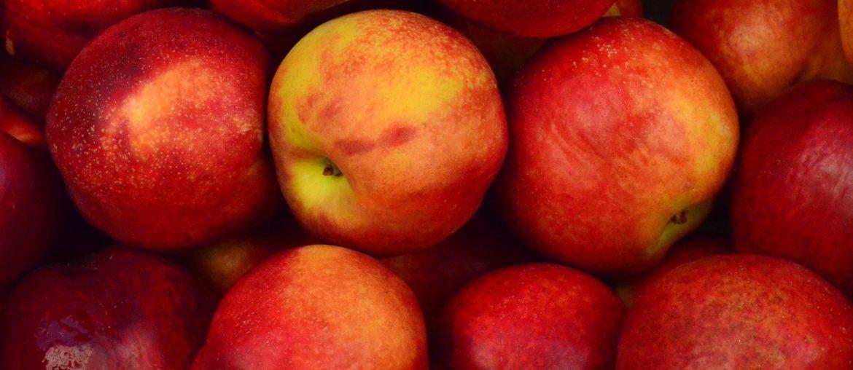 Apples - BC Cider Festival